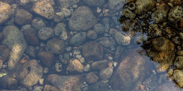 staw kąpielowy - biobasen